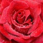 Estudio examina el efecto de lubricantes sexuales a base de agua o siliconas
