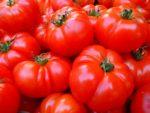 Tomates rojos contra el cáncer de colon